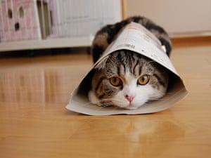 For the LOL of Cats: Maru by Mugumogu