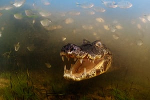 Veolia: Into the mouth of the caiman