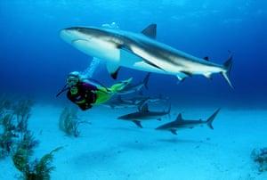 Bond locations: CARIBBEAN REEF SHARKS  Carcharhinus perezi  AND DIVER.  BAHAMAS