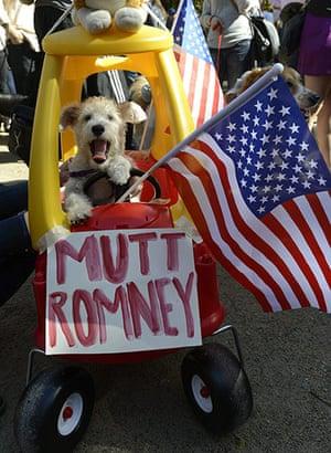 Dog parade: Oscar dressed as Mutt Romney