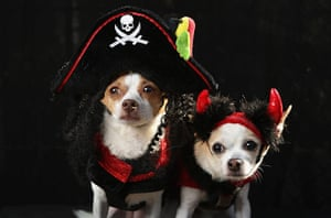Dog parade: Little and Pants pose as a pirate and a devil