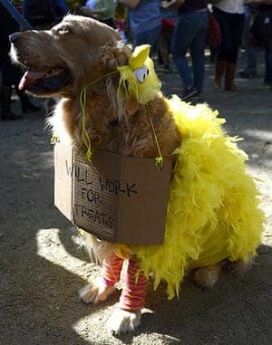 dog-parade: Big Bird dog