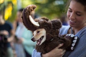 Halloween dogs: A dog dressed as a wooly mammoth is held in the arms of its owner