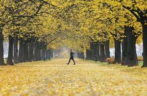 Autumn colours: A woman walks under autumn colored trees in a park in Moscow, Russia