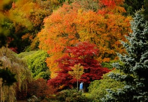 Autumn colours: Changing autumn leaves in Sheffield Park Gardens, East Sussex