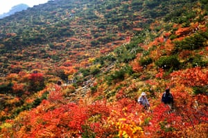 Autumn colours: People walk among the autumn colours at Mount Adatara in Japan