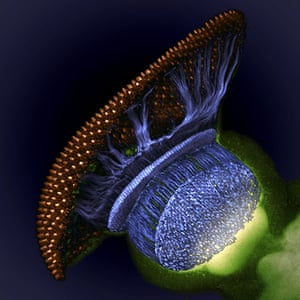 Nikon Small World: Nikon Small World photography competition 2012 winners