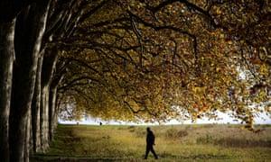 Autumn idyll: A man walks under trees with its autumn leaves turning yellow near Lausanne, Western Switzerland.