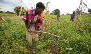 Katine project, Uganda