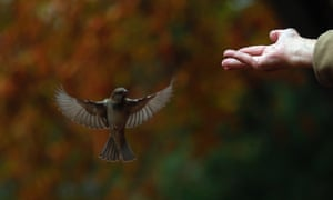 An angelic sparrow is fed by a man in Madrid's Retiro park on a warm autumn day.