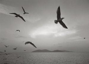 Pentti Sammallahti : Birds by Pentti Sammallahti