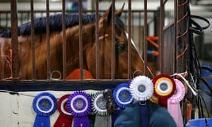 A horse waits in a stable during the 2012 Washington international horse show at Verizon Centre. Horses and riders from the U.S. and abroad gathered to compete in show jumping, hunter and equitation during the six-day event which will run until Sunday.