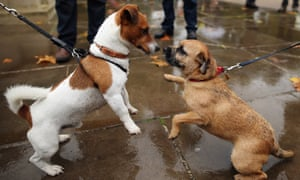 MPs keep their dogs on a tight leash