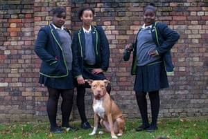 Dogs: Abeni, Leilah and Kermia with Storm