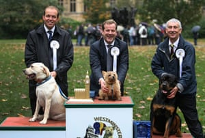 Westminster Dog: Winners of the Westminster dog show