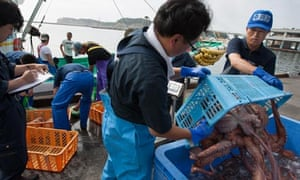 Japanese fisherman land their catch of octopus, and large whelks