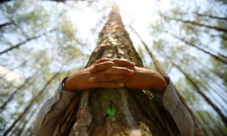 A boy hugs a tree trunk