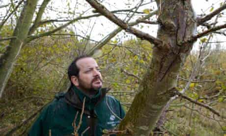 Mike Ryder examines trees for signs of ash dieback in Suffolk