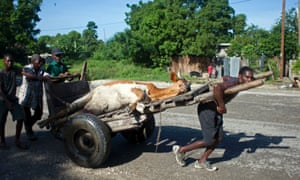 People transport their cow that died during the passing of Hurricane Sandy on a wheelbarrow to an area to slaughter it in Port-au-Prince, Haiti, Saturday, Oct. 27, 2012. As Hurricane Sandy swirls off toward the U.S. East Coast, the Caribbean is mourning the storm-related deaths of at least 43 people and cleaning up wrecked homes, felled power lines and fallen tree branches. (AP Photo/Dieu Nalio Chery)