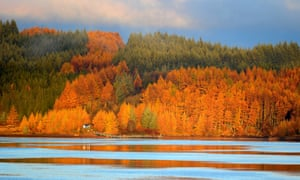 Stunning colour from the autumnal trees as the sun rises over Kielder Water in Northumberland.
