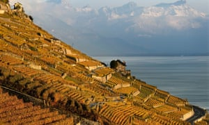 The autumn coloured vineyards of Lavaux on the shores of Lake Geneva, pictured in front of the snow-topped Swiss Alps, in Rivaz, Switzerland. The Lavaux Vineyard Terraces have been named a UNESCO World Heritage Sites since 2007.