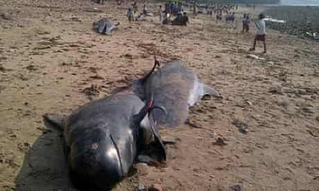 Beaches whales in Indonesia