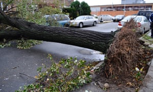 Downed tree in East Elmhurst, Queens, after Sandy hit New York