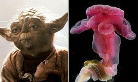 Yoda-worm composite