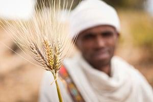 Seed Freedom Fortnight: Gaia Foundation