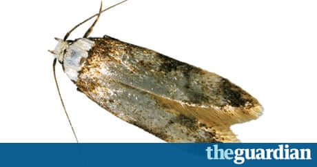 How Can You Get Rid Of Clothes Moths Environment The