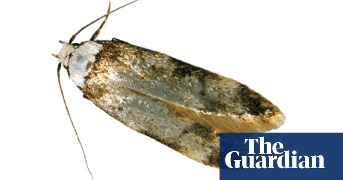 How Can You Get Rid Of Clothes Moths Environment The Guardian
