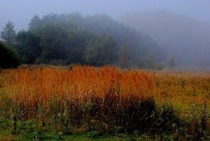 Green Shoots: Flickr