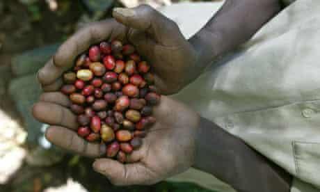 Ethiopian coffee farmer with beans