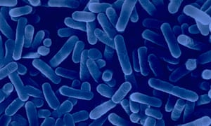 Legionella bacteria which causes legionnaires disease