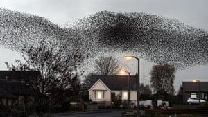 20 Photos: Starling Murmurations over Gretna