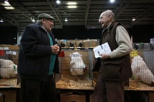 Poultry Show: Two breeders chat at The National Poultry Show