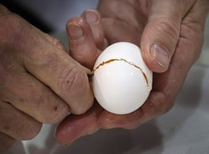 Poultry Show: Judge Malcolm Thompson opens an egg for inspection