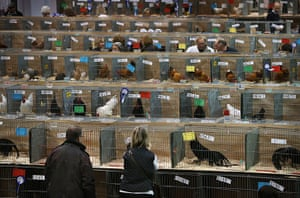 Poultry Show: Visitors walk amongst rows of cages containing birds