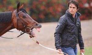 Race horse Dunaden has a yawn while being walked by Mathieu Brasme at Werribee Racecourse in Melbourne, this morning.