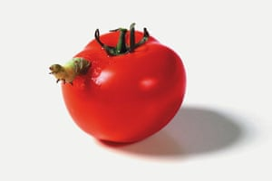 Art of Arrangement: Caterpillar Eating a Tomato, 1998 by Catherine Chalmers