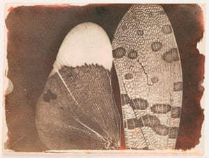 Art of Arrangement: Insect Wings, as seen in a Solar Microscope, c.1840 by Fox Talbot