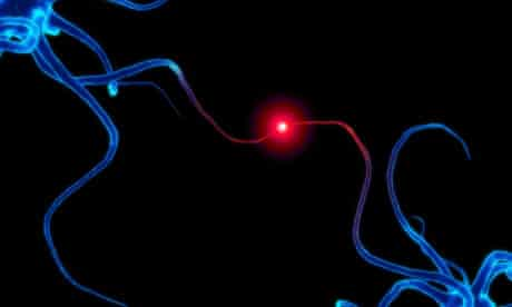 Communicating neurons