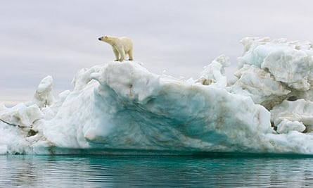 Polar bear standing atop an iceberg floating in the sea