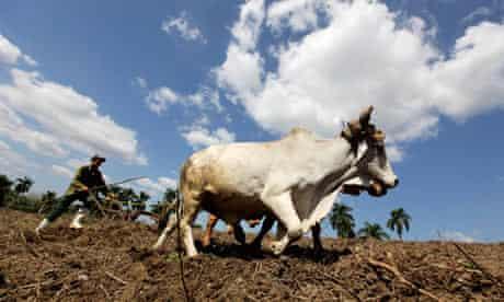 Cuba farmer blue sky