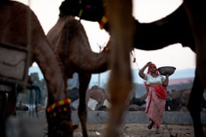 Camel fair: A woA woman carries a bowl while picking up camel dung at dawn