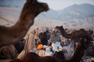 Camel fair: Camel owners sit together near their herds