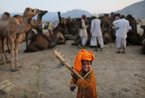 Camel fair: A young boy from a camel herding family plays music
