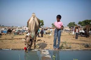 Camel fair: Annual Camel Fair Held In Pushkar