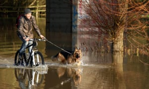 The River Nene at Peterborough, Cambridgeshire has now burst its banks, but that doesn't stop this cyclist getting through with his German shepherd dog.