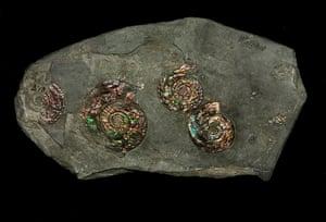 Natural History Treasures: The Natural History Museum reveals its Treasures